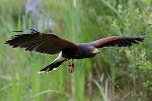 Spannende roofvogelshow