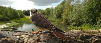Afbeelding bij Bezoek de roofvogelshow van Topvogel!