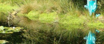 Afbeelding bij Poppentheater 't Groene Land: 't Blauwe Tover-ven