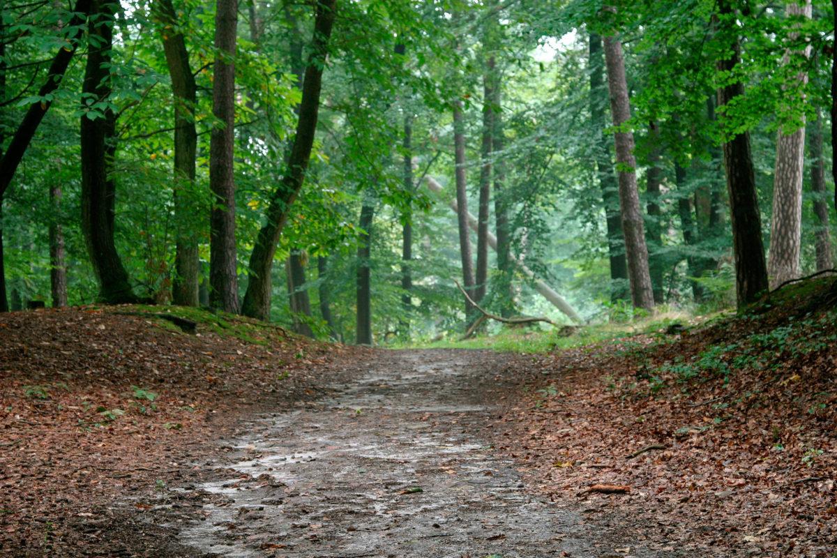 Wandelen in de Oisterwijkse bossen